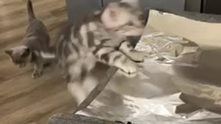Unsuspecting kitten gets totally spooked by aluminum foil