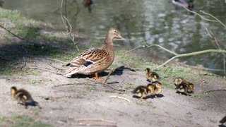 The most beautiful family in nature