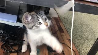 cute kitten playing around table