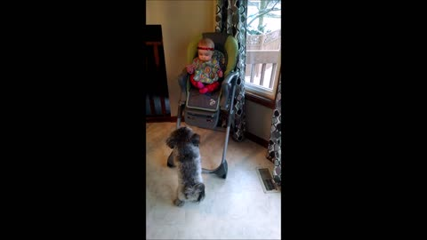 Adorable puppy really wants to play with baby