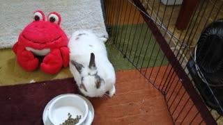 Chuck Bunny...43
