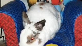 Chuck Bunny...6