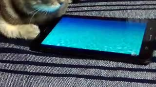The cat catches a fish on the tablet.
