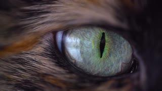 Cat's eye animal eye cat look