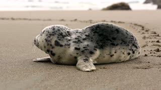 seal on the beach 2021