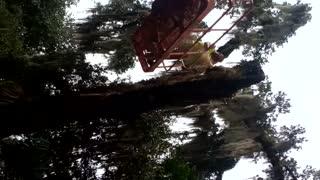 Water oak removal