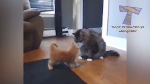 gait cats