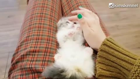 Munchkin Kitten Ball In A Cup