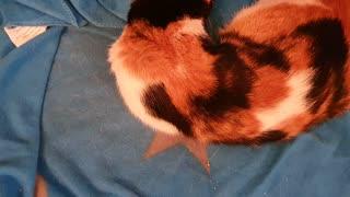 Sleeping CAT Time Lapse