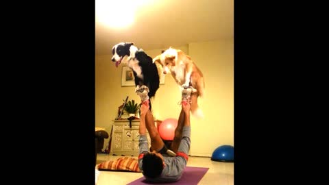 Talented Dogs Show Impressive Skills Performing Circus Tricks