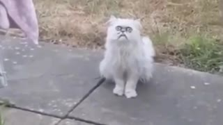 The scariest cat in the world