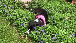 Cute dog in flowers
