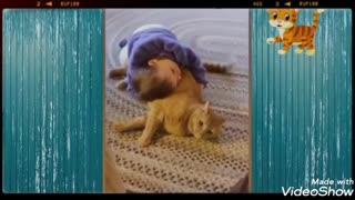 Animals life with children