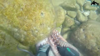 Amazing Diving skill Hunting Giant Octopus Underwater