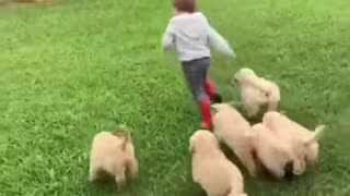 Great video of people playing with dogs