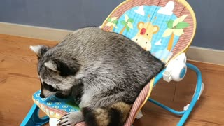 Raccoon is embarrassed because the snack has slipped out of a perforated cup.