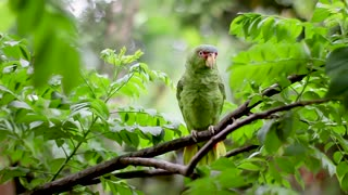 Perfect Green Bird