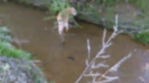 Elsa in creek