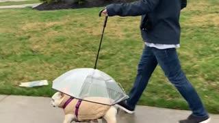 Coco Has Her Own Umbrella