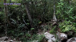Amazing Girl Catching Big Crocodile in Forest - Cooking Big Crocodile And Eating delicious