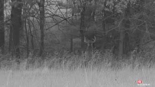 Missouri buck