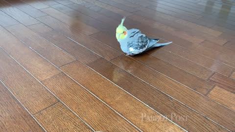 Birds react to kiwi fruit