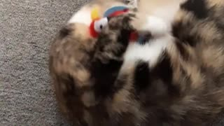 Cats are fighting with toys|cats fight new cat video 2021