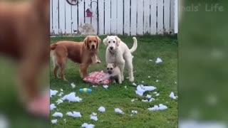 Funny Animal video cat and dog part 7