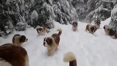 Cute Doggo Avalanche!!! 🐶❄️☃️🧊