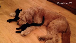 Black cat and brown dog sleep next to each other