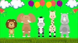 world dancing animal dancer animals
