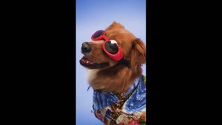 Crazy Funny Dog in Fashion Show