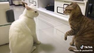 English speaking cats!!