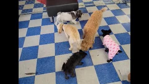 Rosie's Birthday at The Dog Club