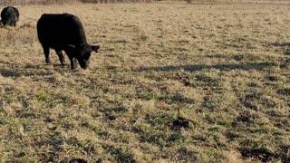 Elkhead Farms