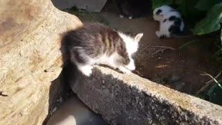 Kittens wriggling.