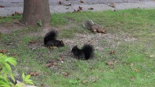 chipmunks having a breakfast together