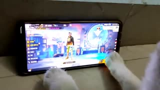 Cat playing game
