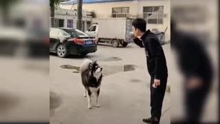 Police dog l