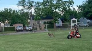 Dog running after my bike