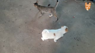 Angry dogs and cats fighting