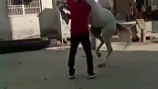 Horse Dance Video