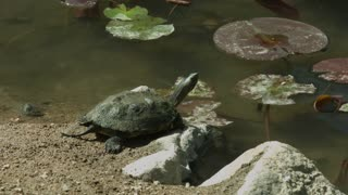 turtle ( Closeup )