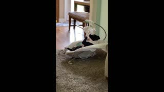 Dog Playfully Paws Toys in Baby Bed