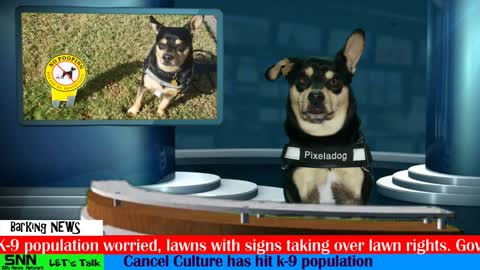 A dog and his news show