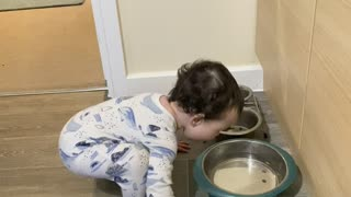 Baby Tries to Drink out of Dog Bowl