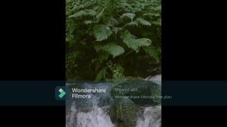 Dense Green Vegetation On A Body Of Rocks Vomiting Water