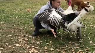 Adorable Turkey Loves Giving Out Hugs