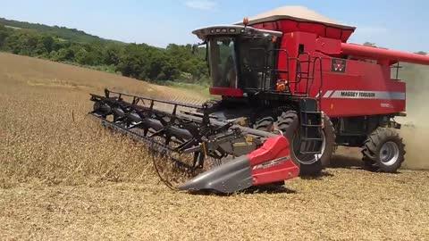 Colheita de soja 2019 em sarandi, PR - MF 9690
