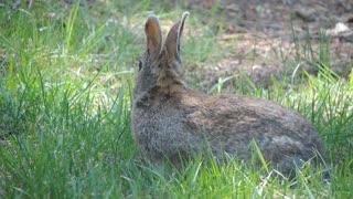 rabbit eating fresh grass amazing full HD new 2021